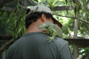 Andrew gets a love bite from an iguana